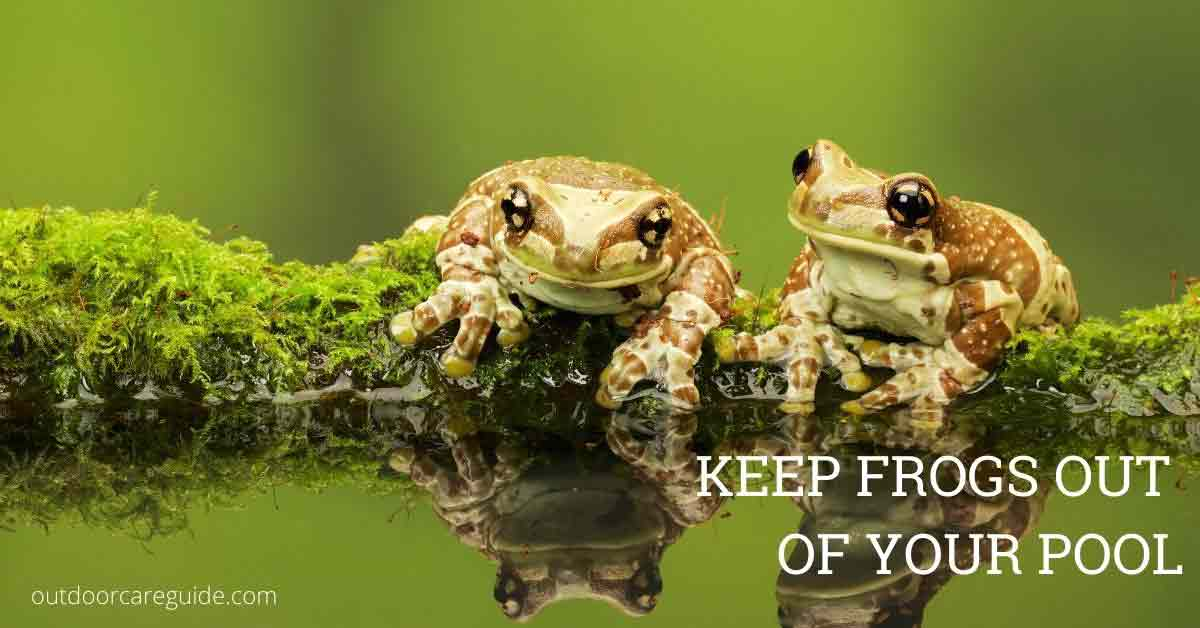 frogs in pool