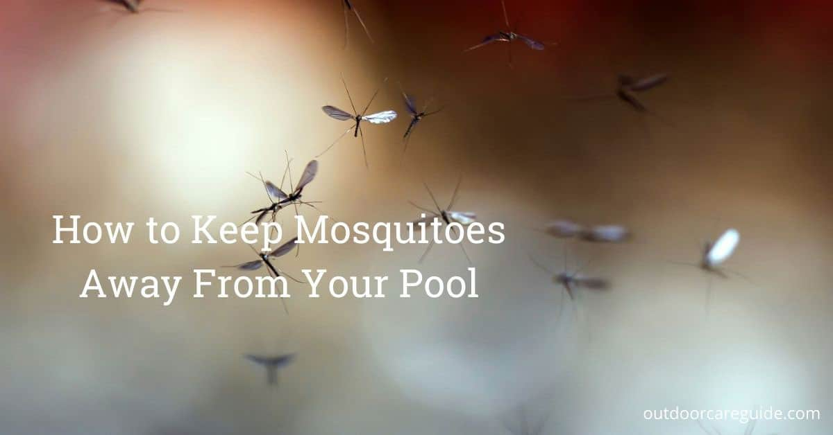 mosquitoes in pool