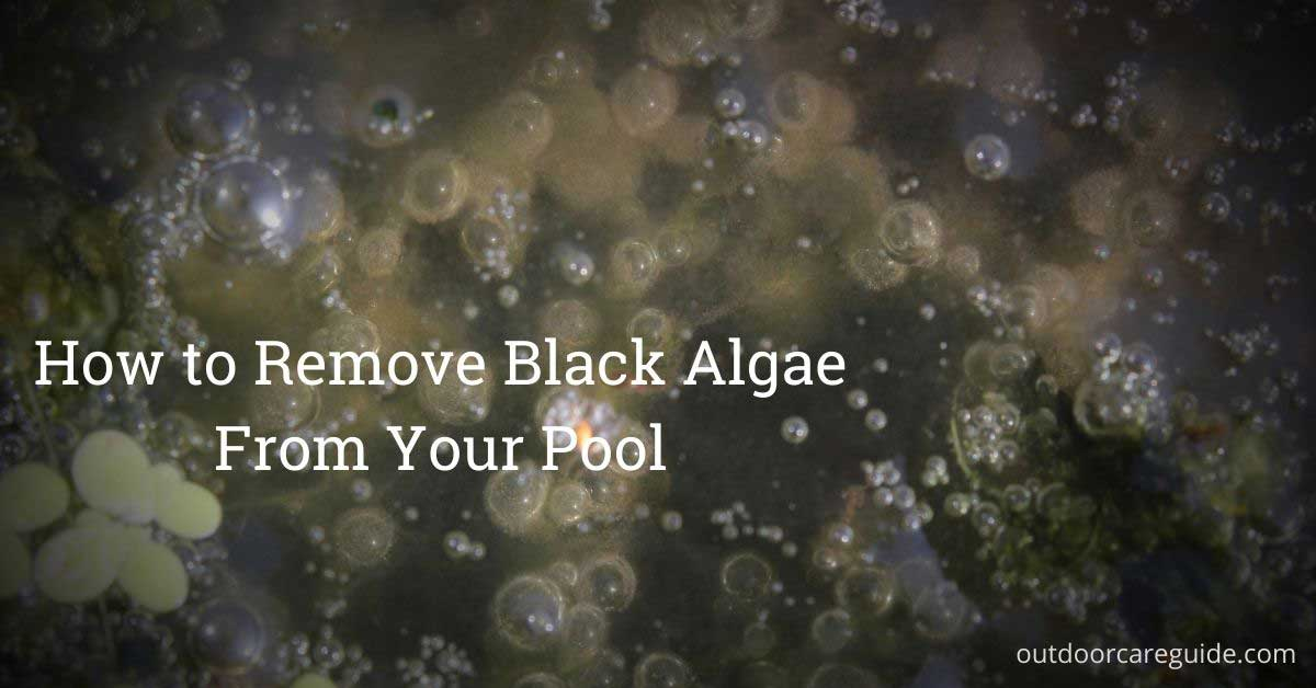 black algae in pool