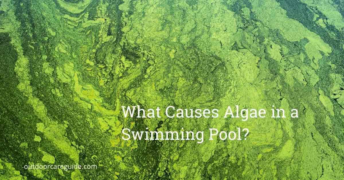 what causes algae in a pool