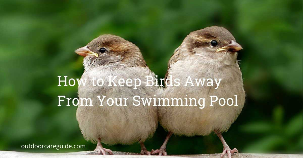 how to keep birds away from swimming pool